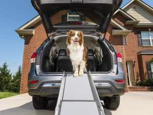 To Allow Your Pet To Get in And Out of Your Vehicle Safely